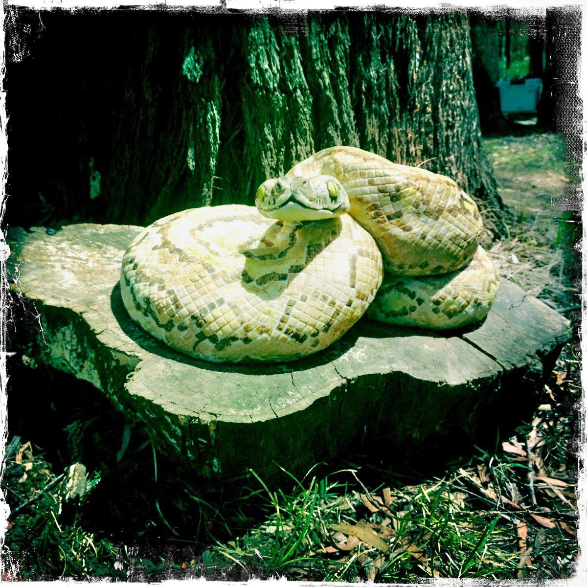 Snake Cake Redleaf Farm