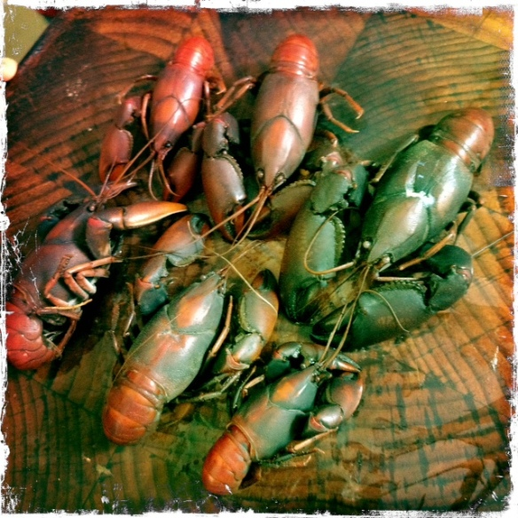 cooked yabby